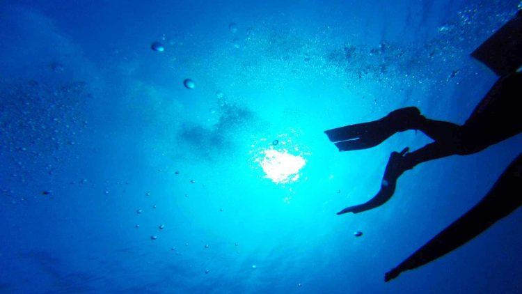 Divers kicking their fins underwater.