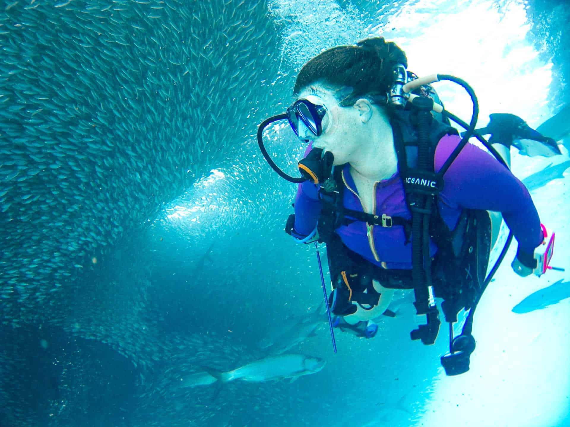 scuba diver baitball fish
